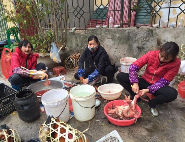 Cách vặt lông gà truyền thống với những dụng cụ vặt lông gà cồng kềnh, không đem lại hiệu quả cao