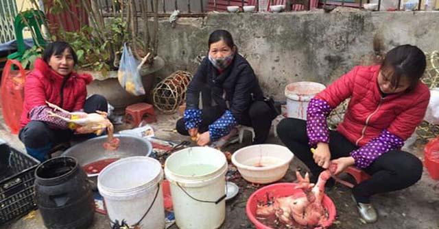 Cách vặt lông gà truyền thống với những dụng cụ vặt lông gà cồng kềnh tuy rẻ nhưng không đem lại hiệu quả cao