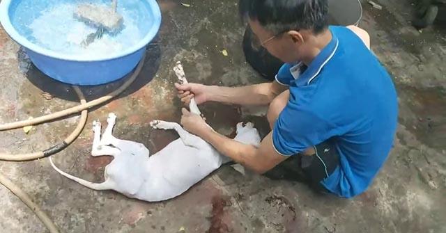 Cách pha nước vặt lông chó, Cách vặt lông chó nhanh nhất