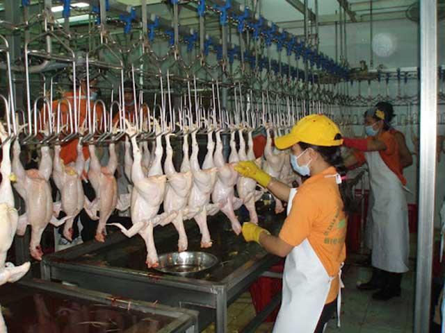 Mua nguyên liệu gà tại lò mổ, mở quán gà rán cần những gì